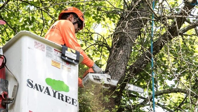 Arborist-Consultations-Fort Wayne Tree Trimming and Stump Grinding Services-We Offer Tree Trimming Services, Tree Removal, Tree Pruning, Tree Cutting, Residential and Commercial Tree Trimming Services, Storm Damage, Emergency Tree Removal, Land Clearing, Tree Companies, Tree Care Service, Stump Grinding, and we're the Best Tree Trimming Company Near You Guaranteed!