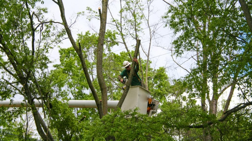 Fort Wayne Tree Trimming and Stump Grinding Services Header Image-We Offer Tree Trimming Services, Tree Removal, Tree Pruning, Tree Cutting, Residential and Commercial Tree Trimming Services, Storm Damage, Emergency Tree Removal, Land Clearing, Tree Companies, Tree Care Service, Stump Grinding, and we're the Best Tree Trimming Company Near You Guaranteed!
