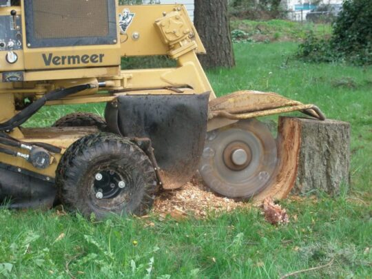 Stump-Grinding-Fort Wayne Tree Trimming and Stump Grinding Services-We Offer Tree Trimming Services, Tree Removal, Tree Pruning, Tree Cutting, Residential and Commercial Tree Trimming Services, Storm Damage, Emergency Tree Removal, Land Clearing, Tree Companies, Tree Care Service, Stump Grinding, and we're the Best Tree Trimming Company Near You Guaranteed!