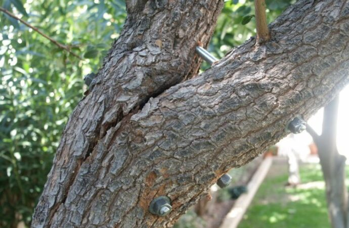 Tree-Bracing-Cabling-Fort Wayne Tree Trimming and Stump Grinding Services-We Offer Tree Trimming Services, Tree Removal, Tree Pruning, Tree Cutting, Residential and Commercial Tree Trimming Services, Storm Damage, Emergency Tree Removal, Land Clearing, Tree Companies, Tree Care Service, Stump Grinding, and we're the Best Tree Trimming Company Near You Guaranteed!