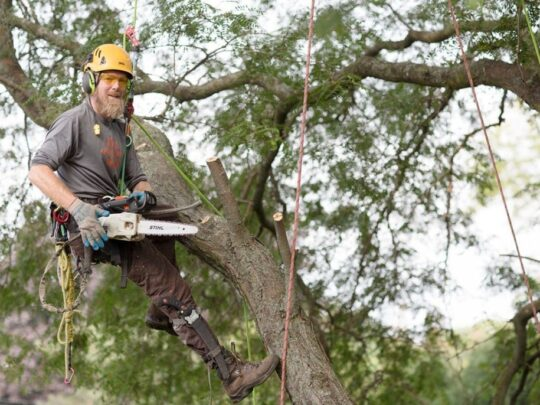 Tree-Cutting-Fort Wayne Tree Trimming and Stump Grinding Services-We Offer Tree Trimming Services, Tree Removal, Tree Pruning, Tree Cutting, Residential and Commercial Tree Trimming Services, Storm Damage, Emergency Tree Removal, Land Clearing, Tree Companies, Tree Care Service, Stump Grinding, and we're the Best Tree Trimming Company Near You Guaranteed!