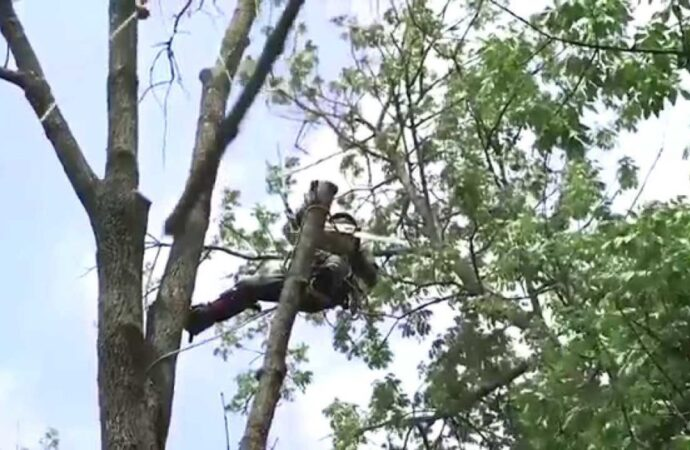 Tree-Removal-Fort Wayne Tree Trimming and Stump Grinding Services-We Offer Tree Trimming Services, Tree Removal, Tree Pruning, Tree Cutting, Residential and Commercial Tree Trimming Services, Storm Damage, Emergency Tree Removal, Land Clearing, Tree Companies, Tree Care Service, Stump Grinding, and we're the Best Tree Trimming Company Near You Guaranteed!