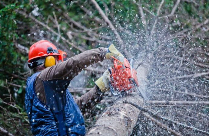 Dunn Mill-Fort Wayne Tree Trimming and Stump Grinding Services-We Offer Tree Trimming Services, Tree Removal, Tree Pruning, Tree Cutting, Residential and Commercial Tree Trimming Services, Storm Damage, Emergency Tree Removal, Land Clearing, Tree Companies, Tree Care Service, Stump Grinding, and we're the Best Tree Trimming Company Near You Guaranteed!